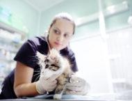 veterinary wellbeing - image